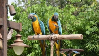 Animal Encounters: Winged Encounters – The Kingdom Takes Flight