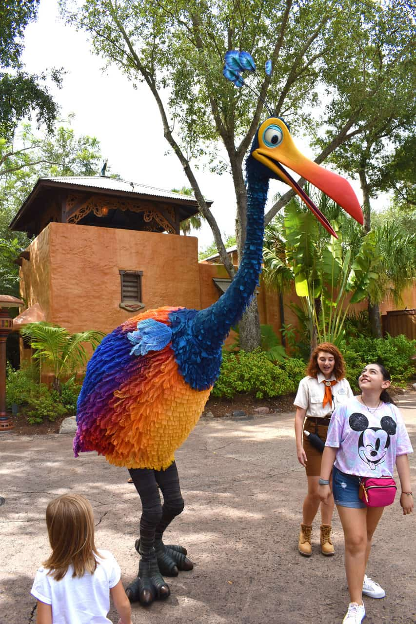 Meet Kevin at Discovery Island