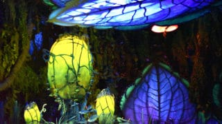 Disney After Hours at Disney's Animal Kingdom Theme Park