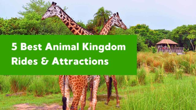 Best Animal Kingdom Rides and Attractions