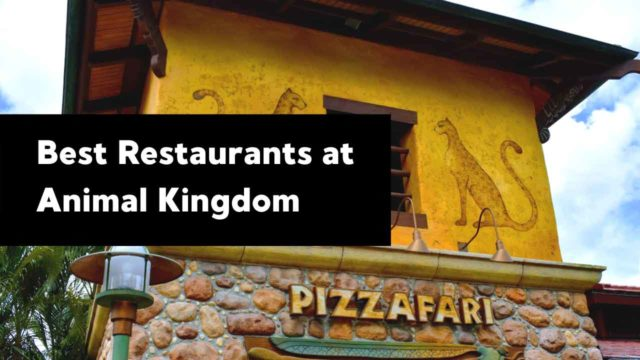 Best Restaurants to Eat at in Animal Kingdom